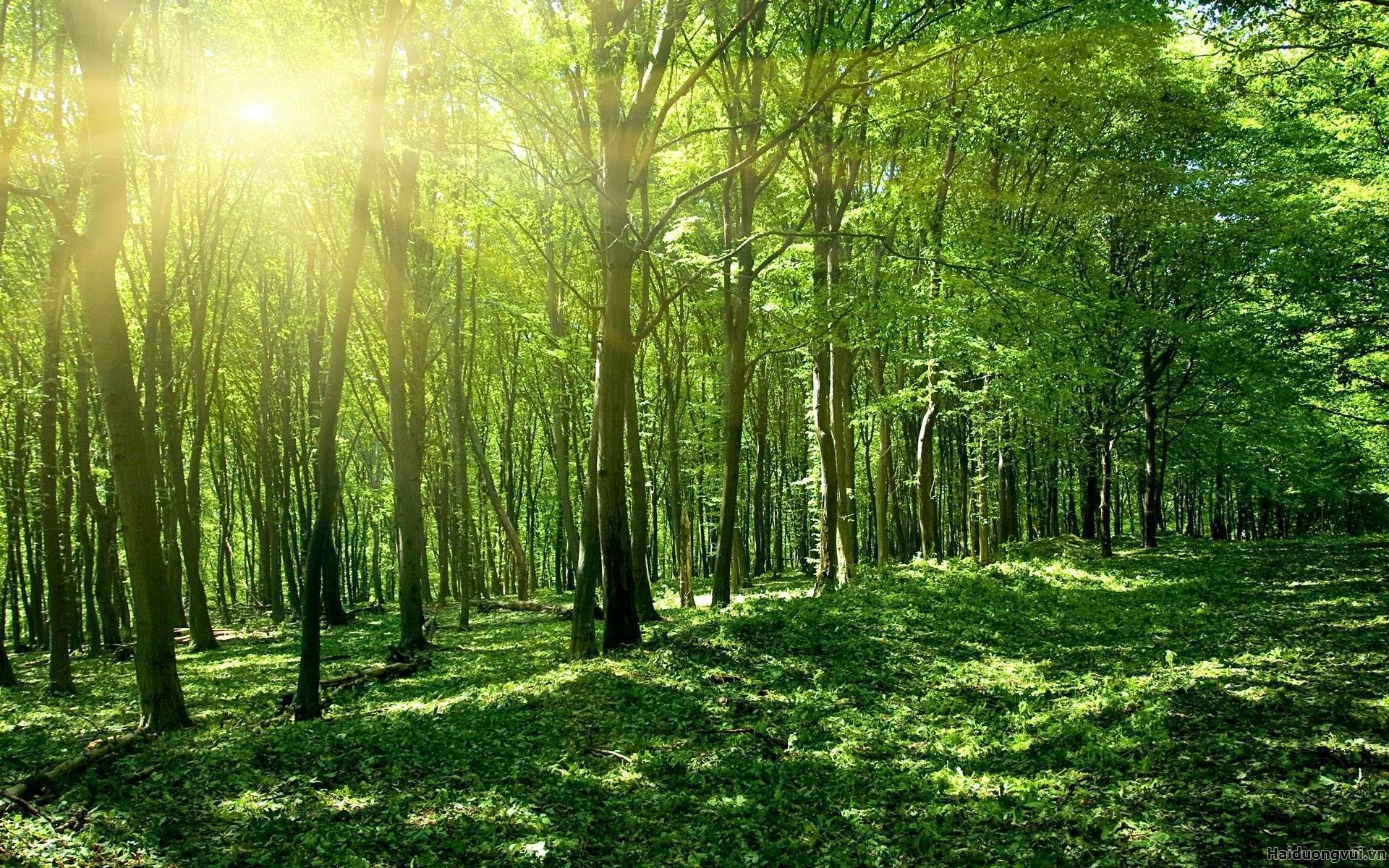 rừng gỗ nhiệt đới